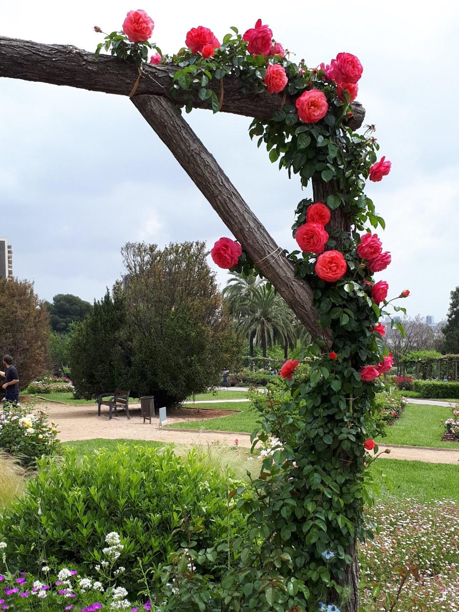 Сад-сервантеса-барселона