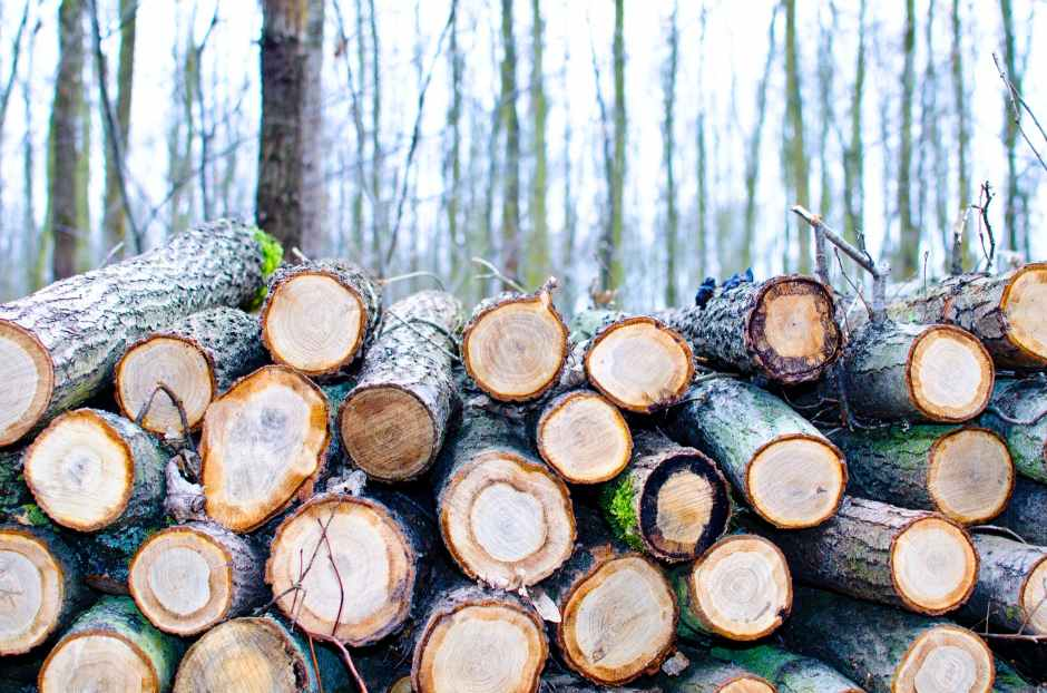 bark brown cut daylight